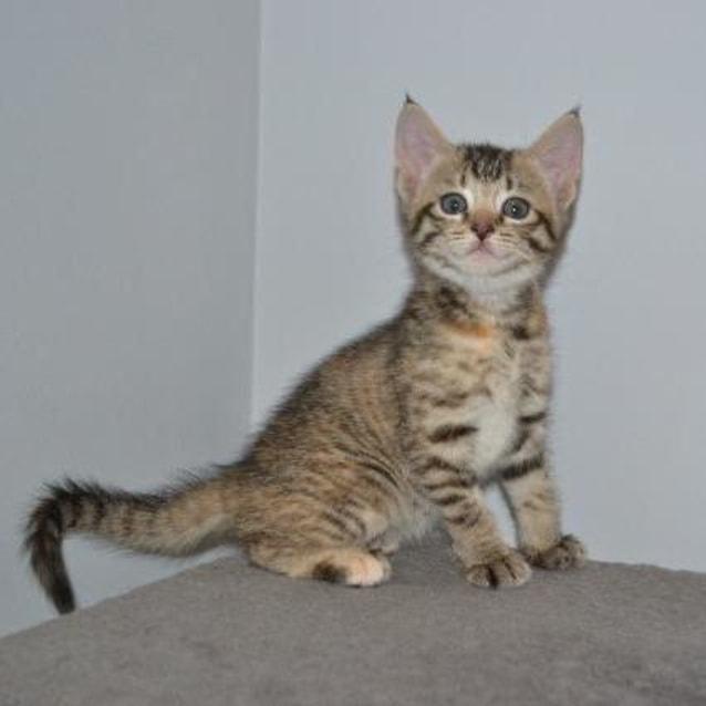 Photo of Remi