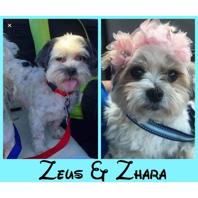 Photo of Zhara & Zeus 🥰