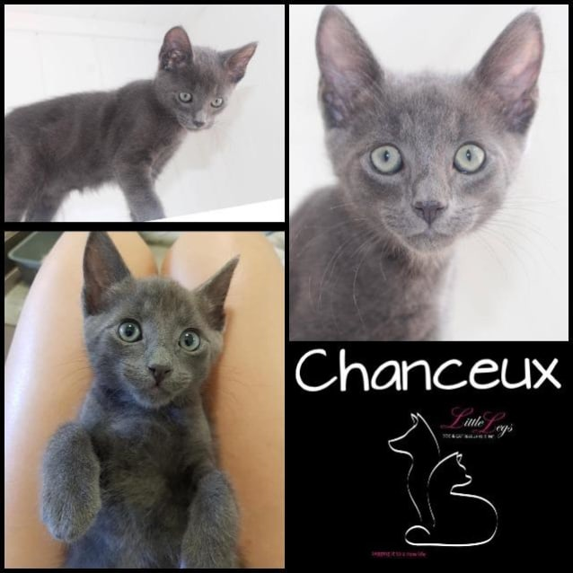 Photo of Chanceux
