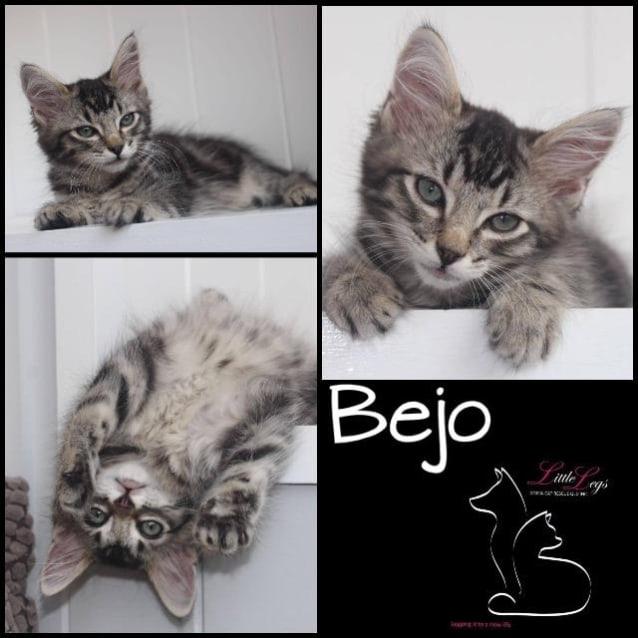Photo of Bejo