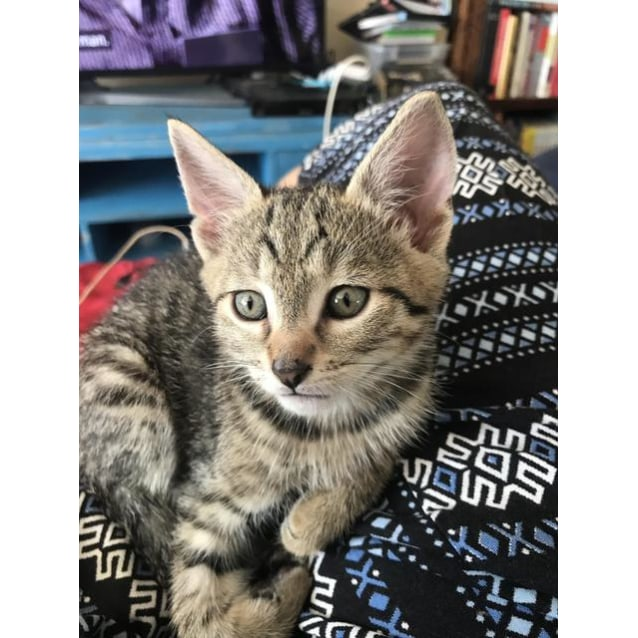 Photo of Luka