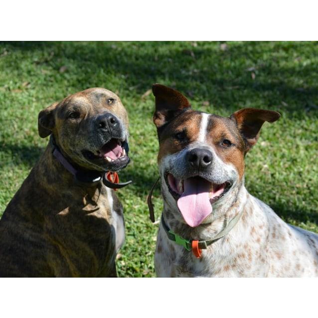 Photo of Annie & Bandit