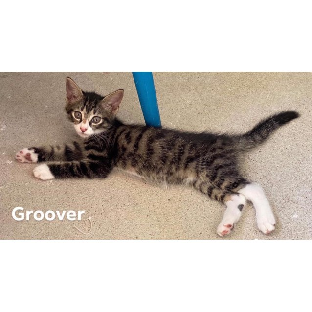 Photo of Groover