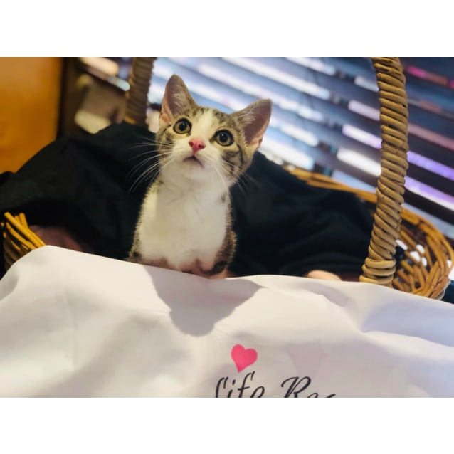 Photo of Masara