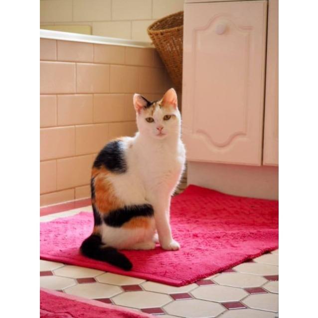 Photo of Nibbler