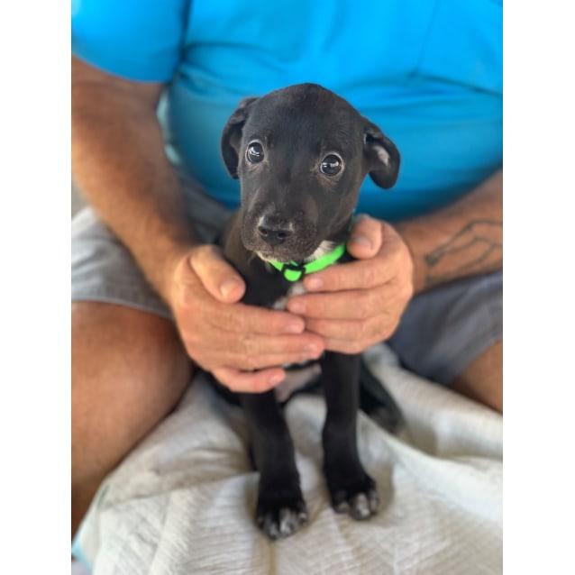 Photo of Jackson ~ Adoption Pending ~