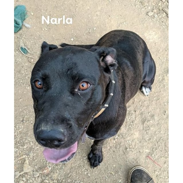 Photo of Narla