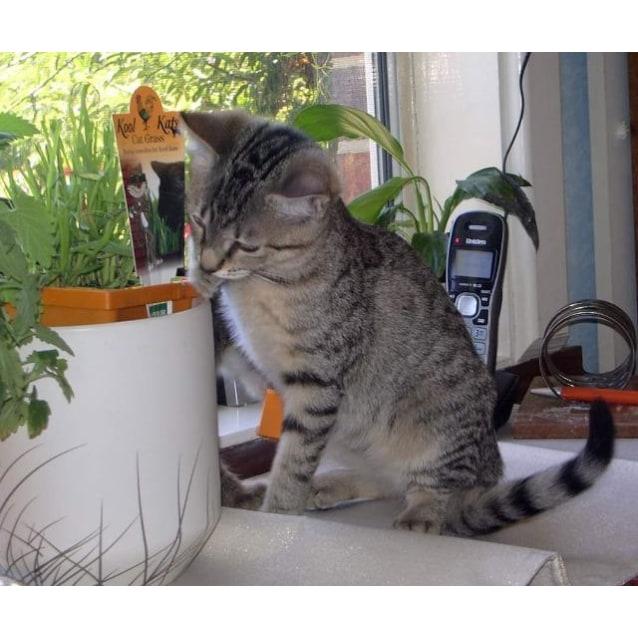 Photo of Nellie
