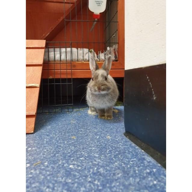 Photo of Christopher Rabbit
