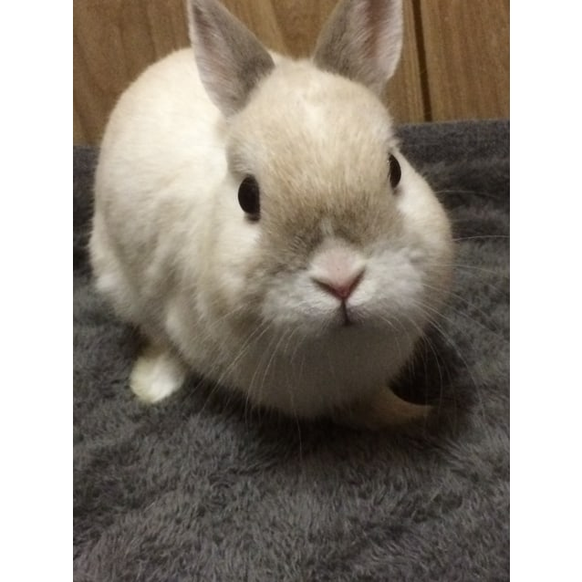 Photo of Kirby