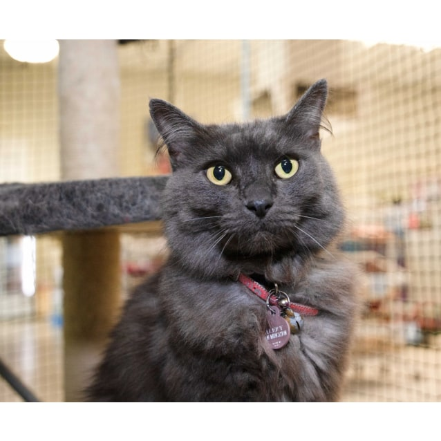Photo of Lady Misty **On Trial With My New Family**