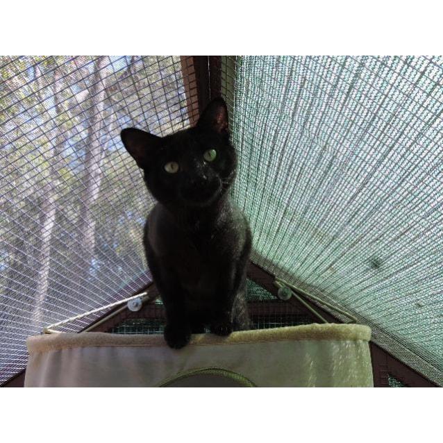 Photo of Olivia (Ollie)