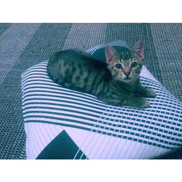 Photo of Kash