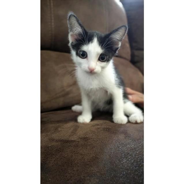 Photo of Dasher