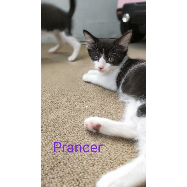Photo of Prancer