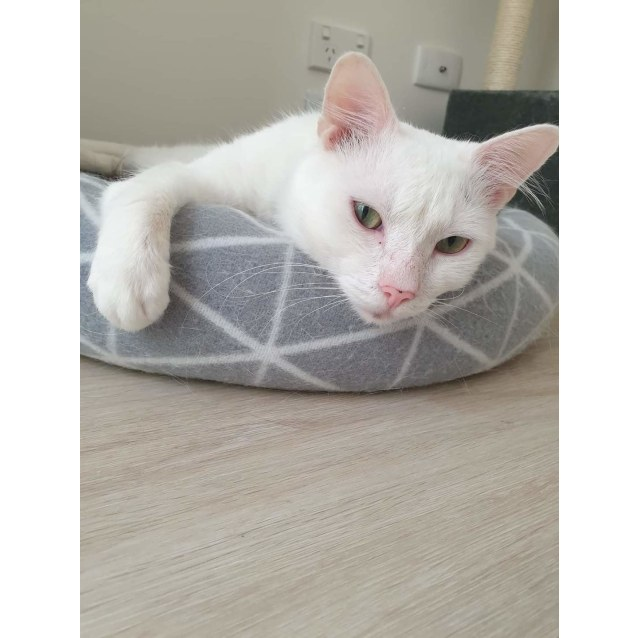 Photo of Domino