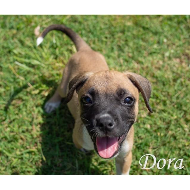 Photo of Dora
