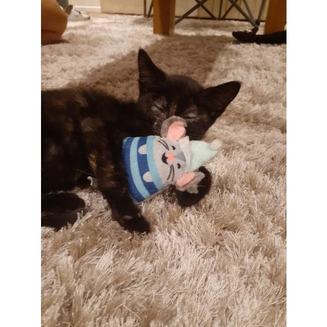 Photo of Luna