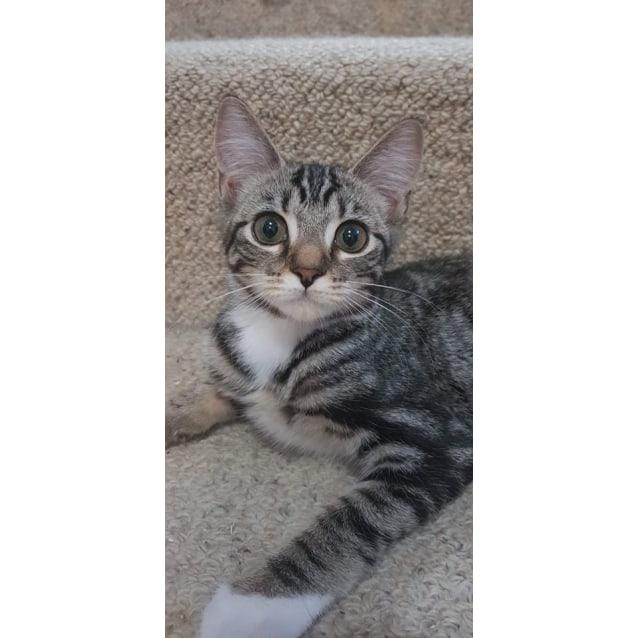 Photo of Zippy