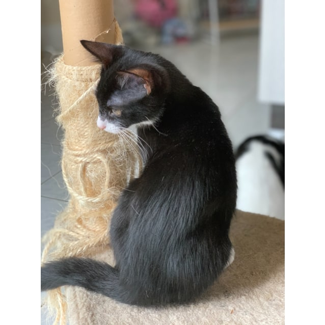 Photo of Gizmo 💗