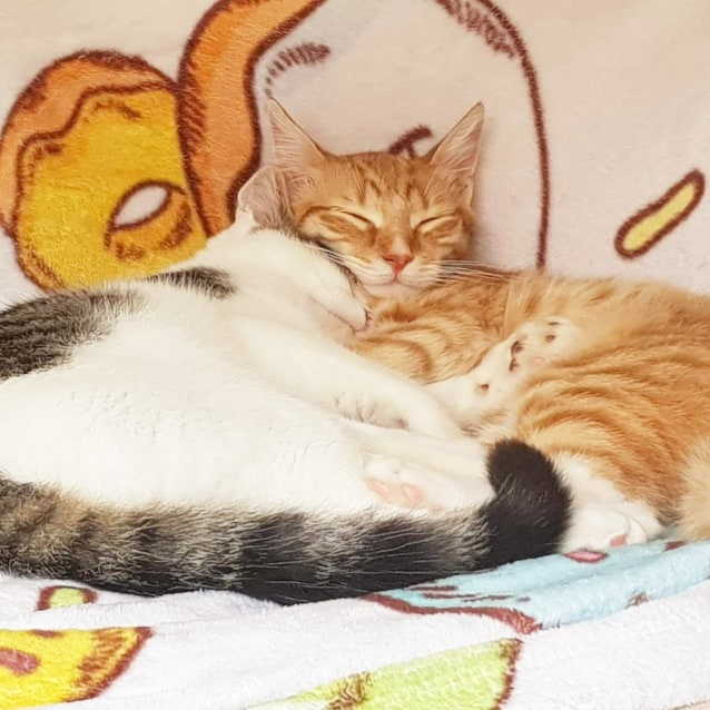 Photo of Oscar & Mika