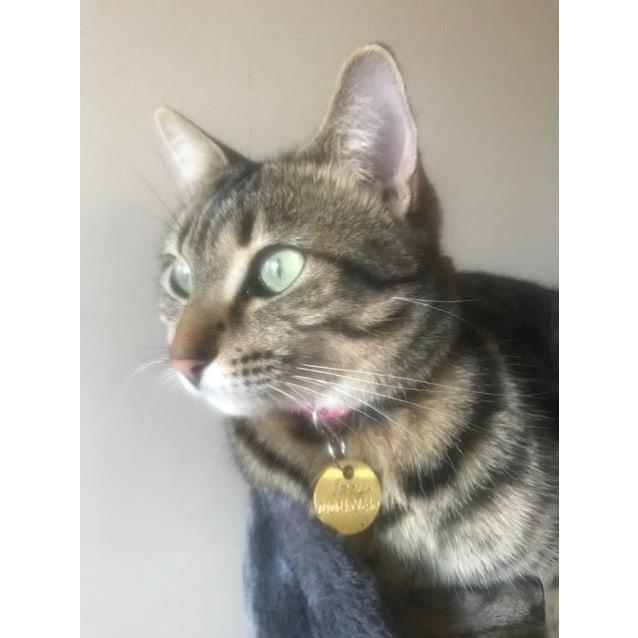 Photo of Izzy