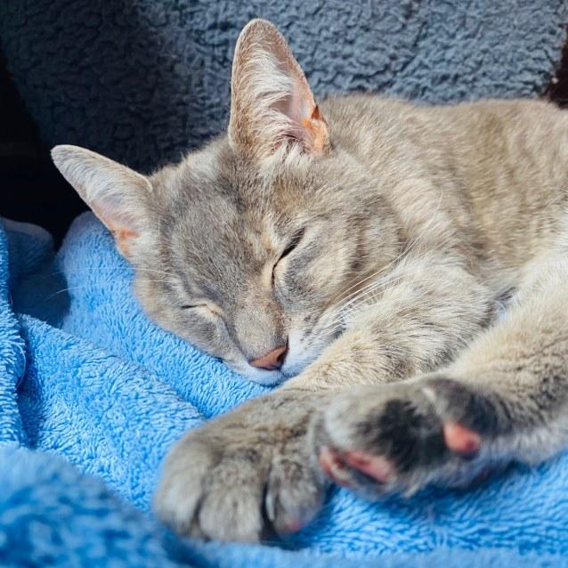 Photo of Coco   Located In Preston