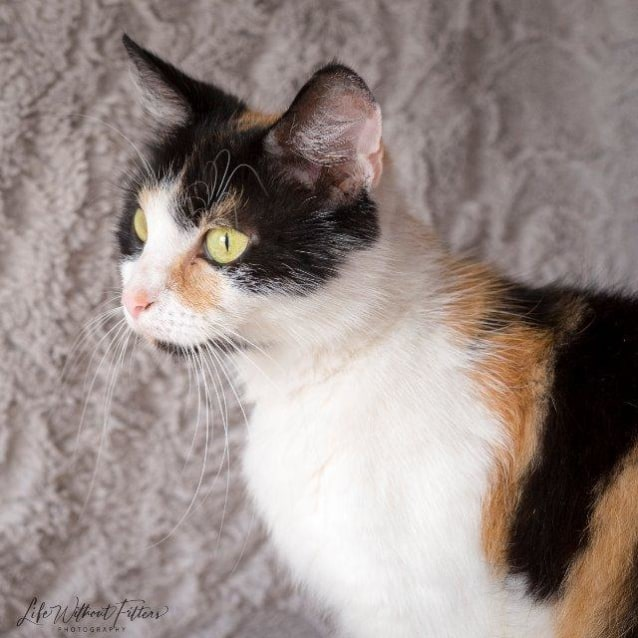 Photo of Kahula