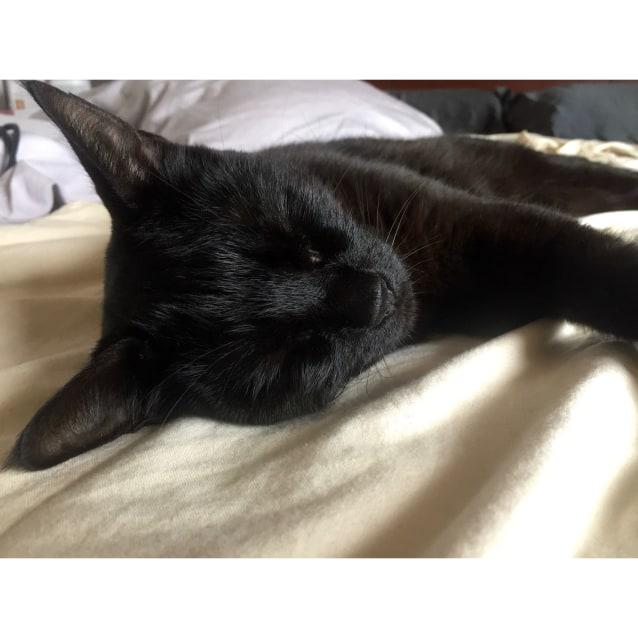 Photo of Tilly ~ 5yo Smoochy Female Cat