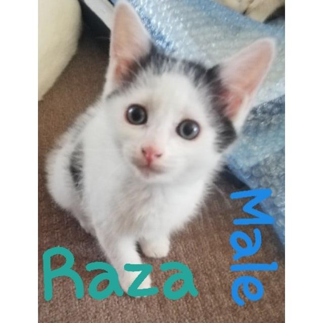 Photo of Kittens