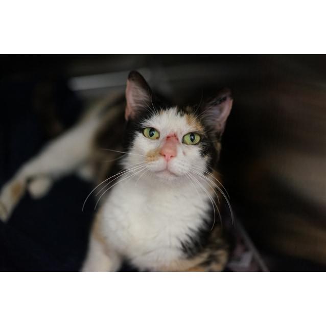 Photo of Hetty