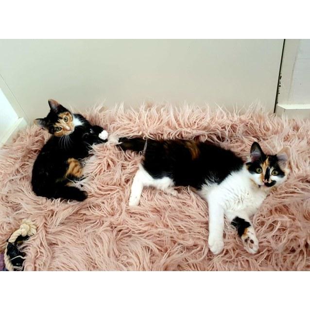 Photo of Megsy & Dottie  ❤❤