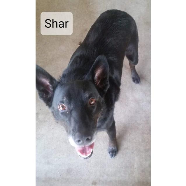 Photo of Shar