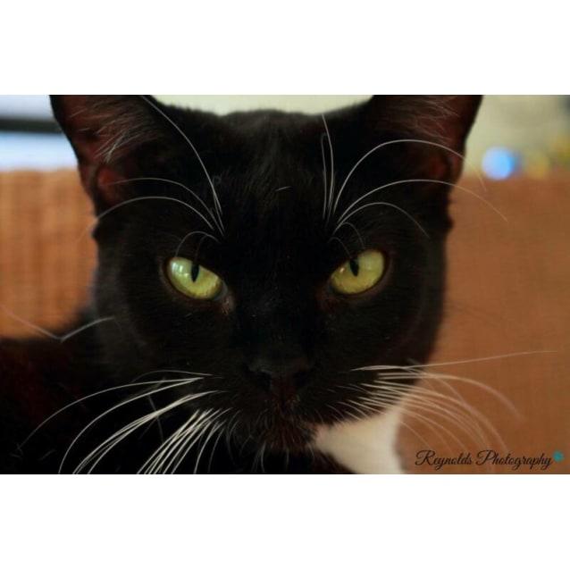 Photo of Freyja