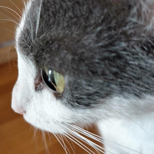 Photo of Vixen