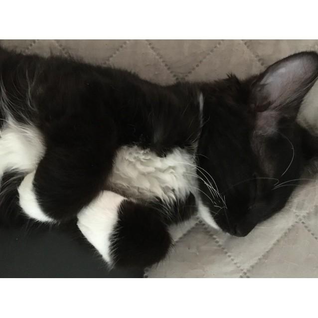 Photo of Osha