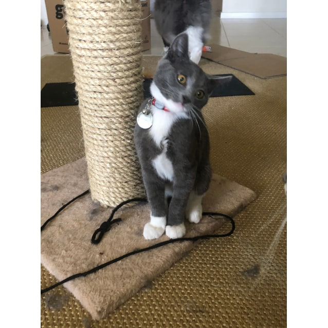 Photo of Smokey (Located In Clyde North)