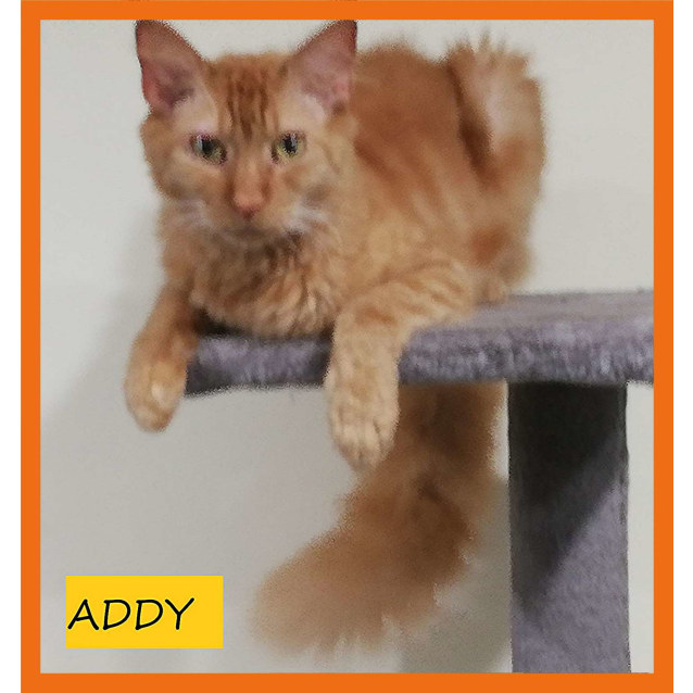 Photo of Addy