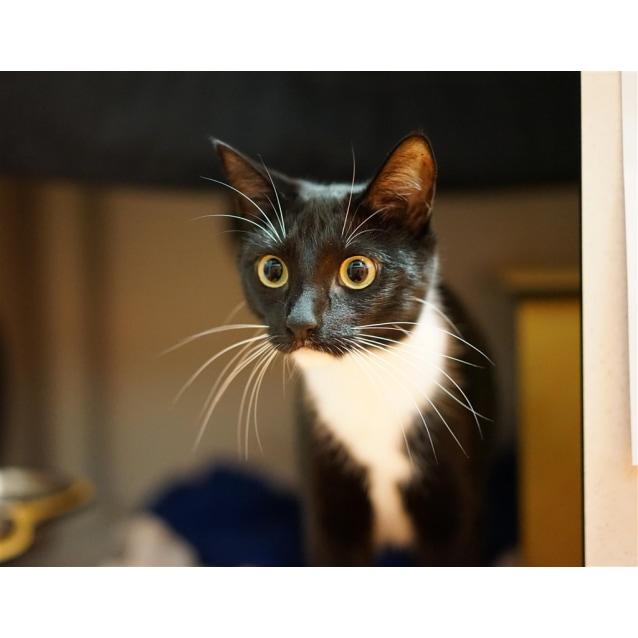 Photo of Tasmin