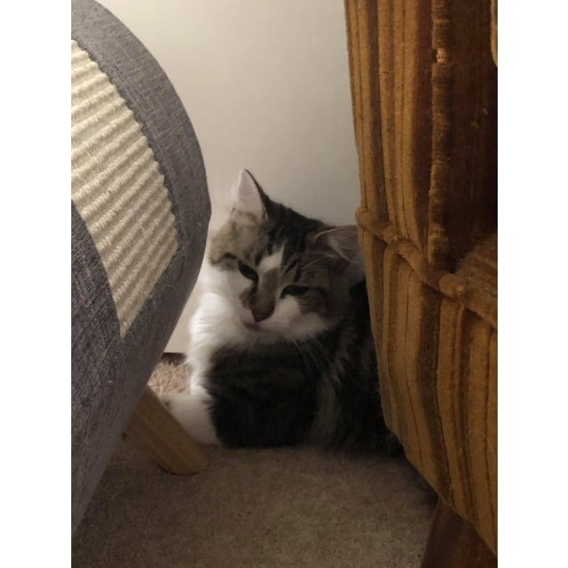 Photo of Delilah (Located In Bentleigh)