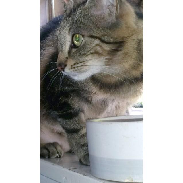 Photo of Pebe