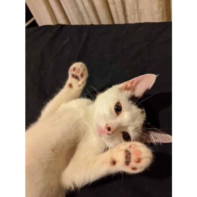 Photo of Dobby
