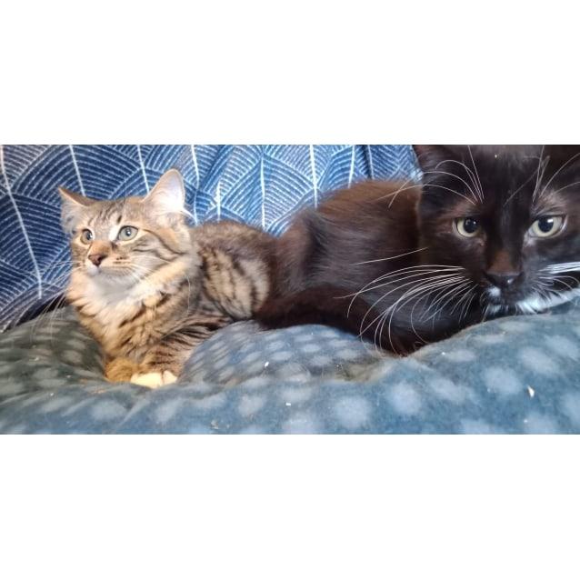 Photo of Romeo & Skye ❤❤