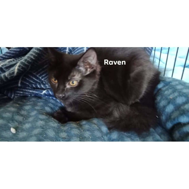 Photo of Raven ❤
