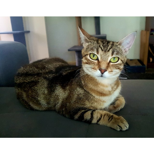Photo of Cinders (Located In Boronia)