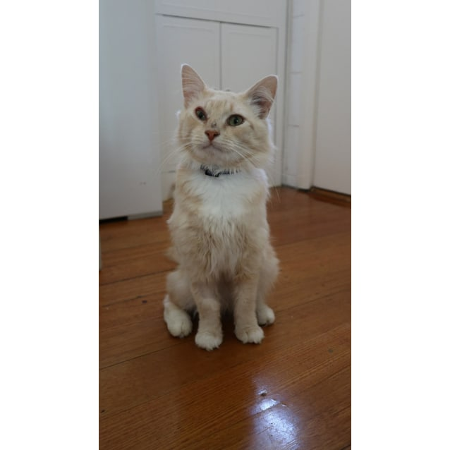 Photo of Leo (Located In Glen Huntly)