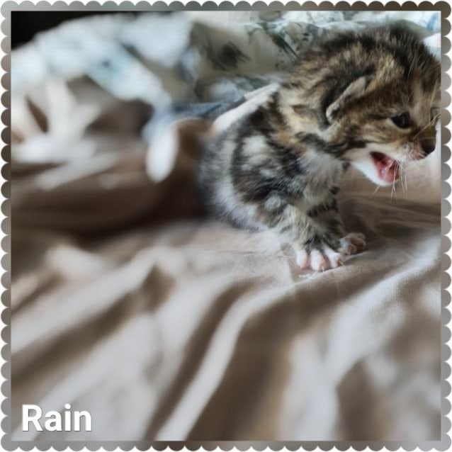 Photo of Rain Pickett