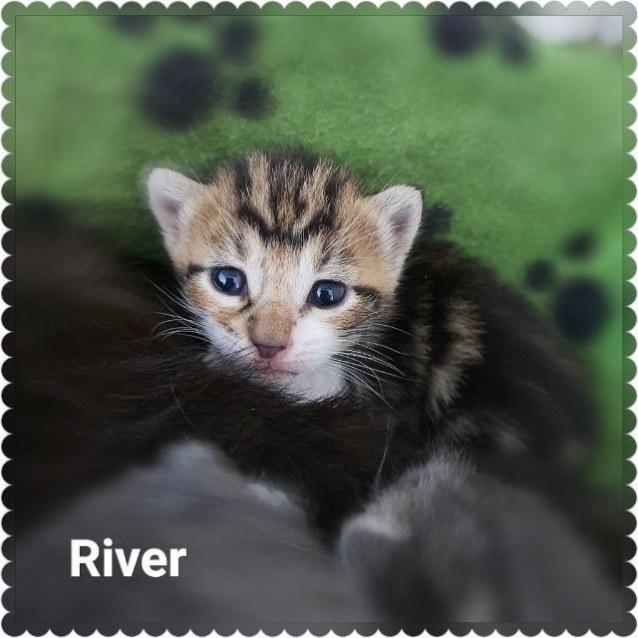 Photo of River Pickett