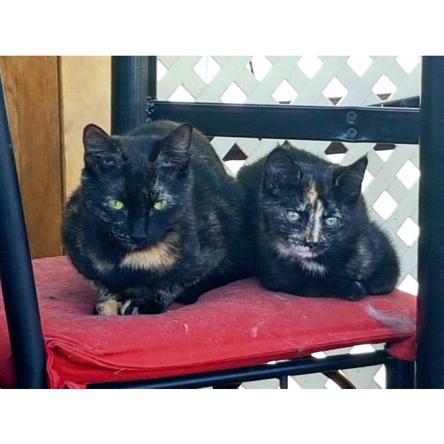 Photo of Celeste And Minnie