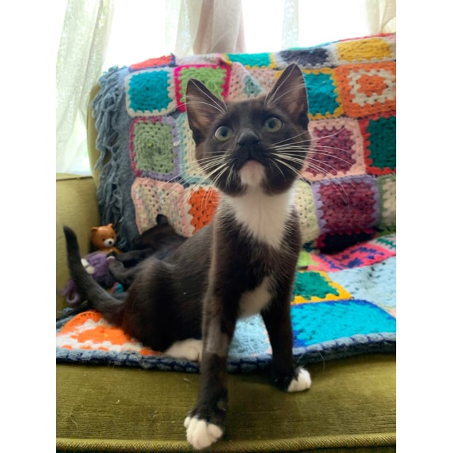 Photo of Noodle   Located In Heidelberg West